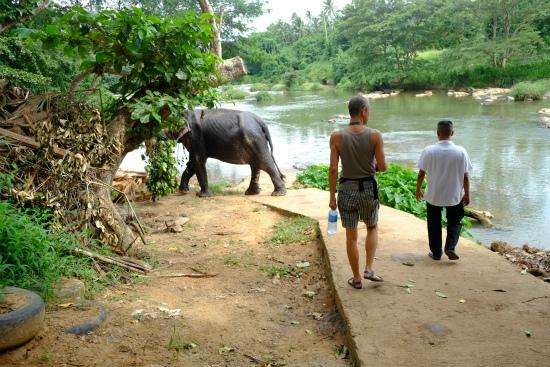 ピンナワラ像の孤児院近くの川を歩く