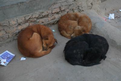 丸待っている犬3連ちゃん