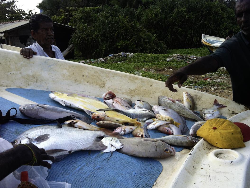 直接魚の値段交渉