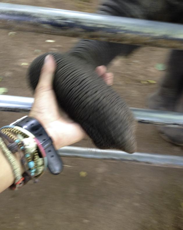 ピンナワラの孤児院で小ぞうと握手