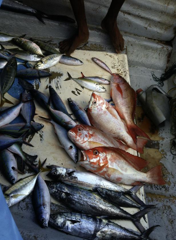 スリランカで獲れる魚