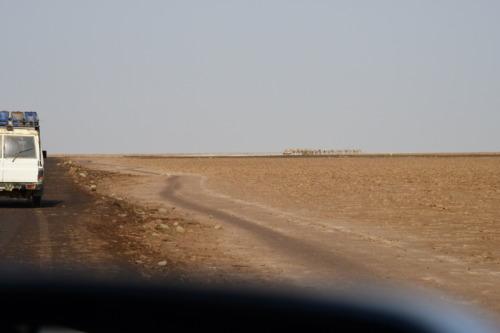超過酷!ダナキル砂漠ツアー