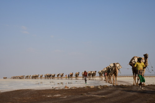 超過酷!ダナキル砂漠ツアー。潮のキャラバン。