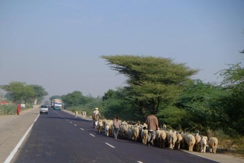 ロイヤルエンフィールドでジョドプルからジャイサルメールまでのドライブDrive from Jodhpur to Jaisalmer at Royal Enfield