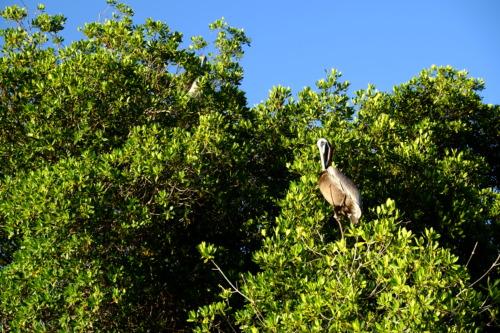 ラグナ・デ・ラ・レスティンガ国立公園 Parque Nacional Laguna de La Restinga
