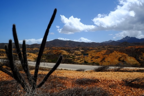 マルゲリータ島ドライブ ラグナ・デ・ラ・レスティンガ国立公園 Parque Nacional Laguna de La Restinga